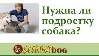 Нужна ли подростку собака? Выбор собаки для подростка(Бесплатный курс по дрессировки = http://sunny.dog/ - пошаговые бесплатные уроки по дрессировке собаки! самые умные..., 2016-05-05T07:01:21.000Z)