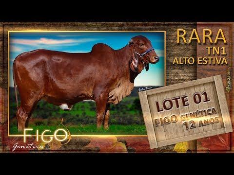 LOTE 01 - RARA ALTO  ESTIVA TN1 - HCFG 1500