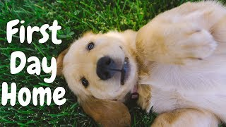8 Week Old Golden Retriever PUPPY FIRST DAY HOME | VLOG WITH DOG #0