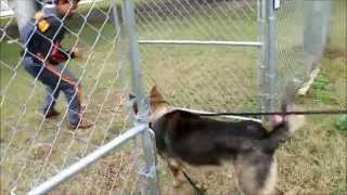 K9 Neko Protection Training, Training Center Jacksonville Fl