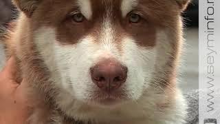 В Курске прошла Всероссийская выставка собак