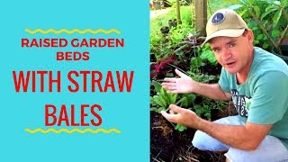 Straw Bales Garden Update as Raised Vegetable Beds