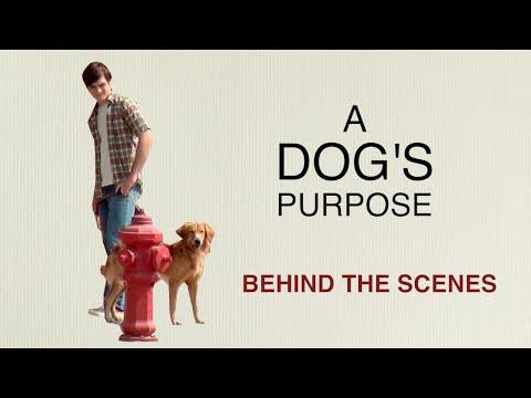 A Dog's Purpose: Behind the Scenes with Britt Robertson, K.J. Apa, Josh Gad, Lasse Hallstrom