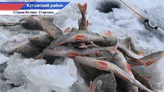 Ловля окуня на мормышку на р Волга СТАРЧИХА Зимний сезон 2021