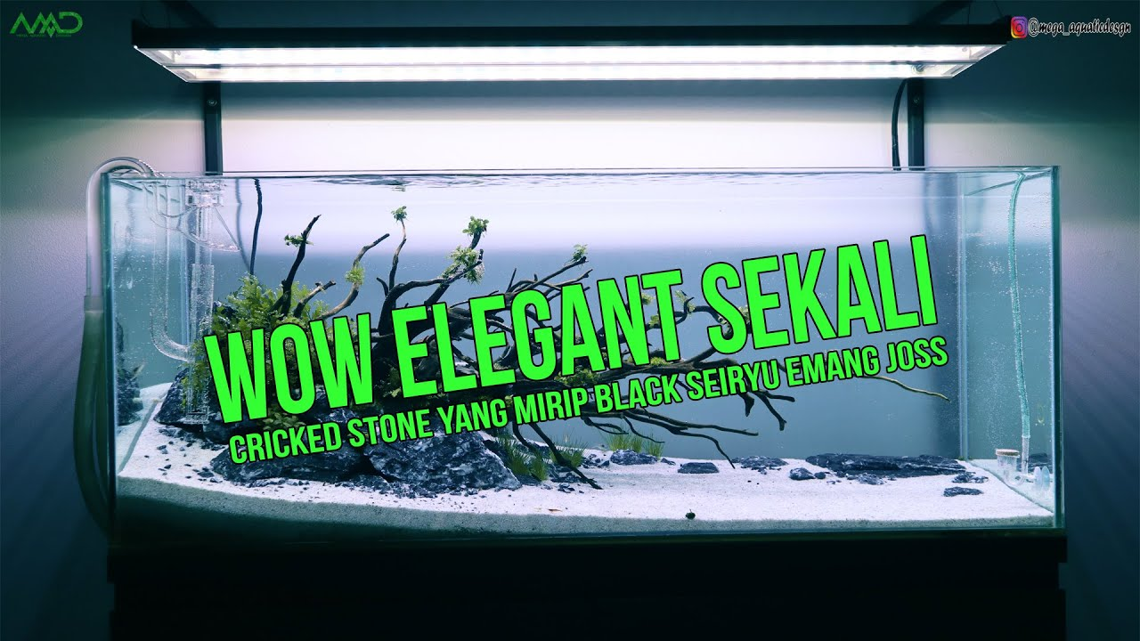 Wow Elegant Sekali Setting Tank Discus Nature Style Youtube