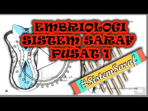 EMBRIOLOGI SISTEM SARAF PUSAT (CNS)Pt.1#SistemSaraf