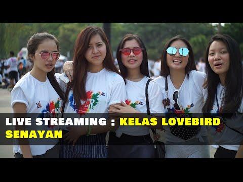 Live Streaming Kelas Lovebird Di Senayan