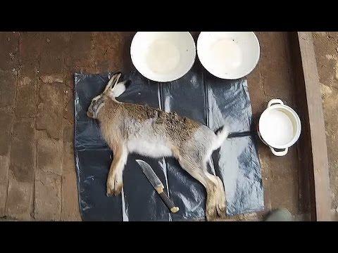 Как снять шкуру с зайца за 2 минуты How to skin a hare or rabbit in 2 minutes