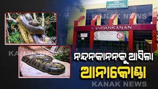 Nandankanan Zoo Gets Nile Crocodiles And Anacondas