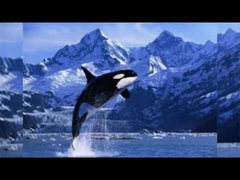 День кита