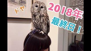 【2018年最終フクロウ動画】1年間ありがとうございした‼