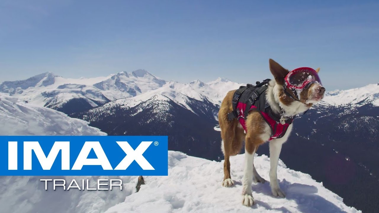 Superpower Dogs IMAX® Teaser Trailer