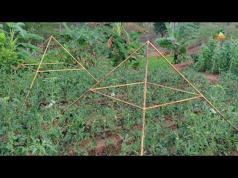 Pyramid Organic Farming @ Pyramid Valley