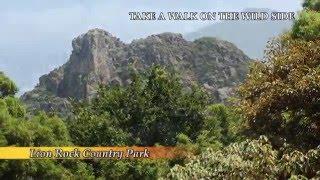 Take a walk on the wild side (2016) thumbnail