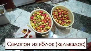 Самогон из яблок (кальвадос)