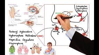 Patofisiologi Gagal Jantung | Pathway Gagal Jantung semoga bermanfaat. Referensi : -Pengantar Asuhan.