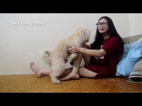 LOVELY SMART GIRL PLAYING BABY CUTE DOGS AT HOME HOW TO PLAY WITH DOG & FEED BABY DOGS #2