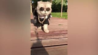 TRY TO NOT LAUGH Top 100 Highlights of Animals BEST FAIL ARMY
