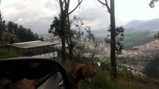 Jogo Weimaraner (paisaje Quito)