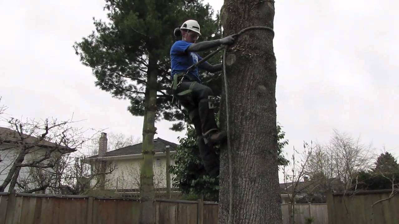 how to use tree climbing spursspikes youtube