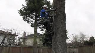 How to use tree climbing spurs/spikes