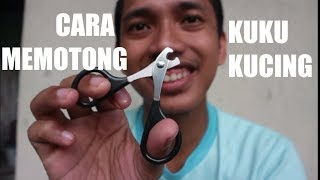 Cara MEMOTONG KUKU KUCING - how to trim a cat's nails /claws