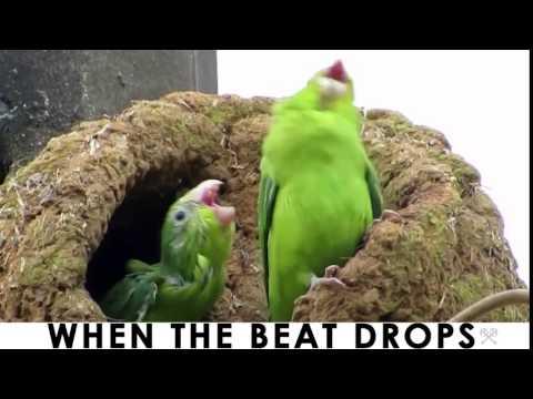 Original When the Beat Drops Green EDM Electro Bird Dance Buddies
