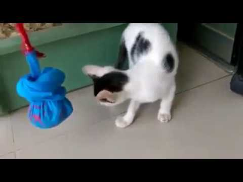 Cute Puppy Hunting Ant | Funny Puppy | Cute Paws