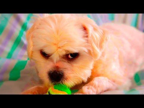 Naughty Dogs feeling Guilty #41
