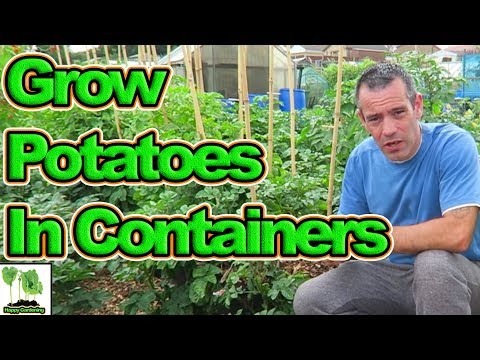 How to sow potatoes in containers for a great harvest in (2018)