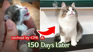 La historia del crecimiento de un gato bebé que sobrevivió al umbral de la muerte.