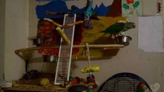 Timelapse Parrot :d