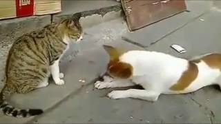 Kucing-Kucing Pemberani (kucing vs anjing)