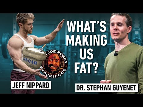 What's Really Making Us Fat? Carbs? Sugar? (Joe Rogan Response) ft. Stephan Guyenet