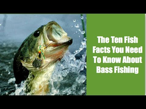 The Ten Fish Facts You Need To Know About Bass Fishing