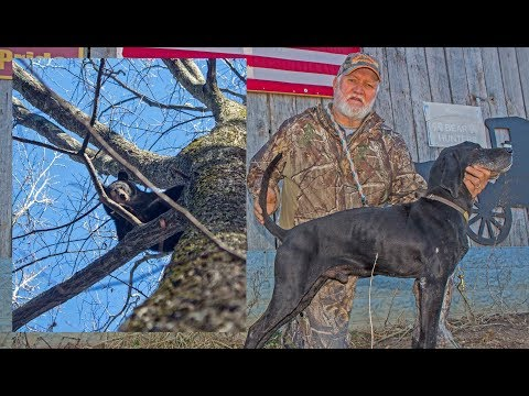 Bear Hunting With Plott Hounds In West Virginia