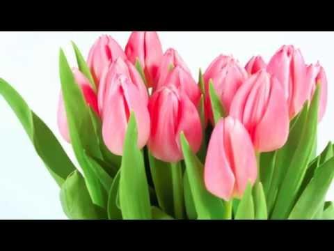 Поздравление с 8 марта! Музыка и стихи