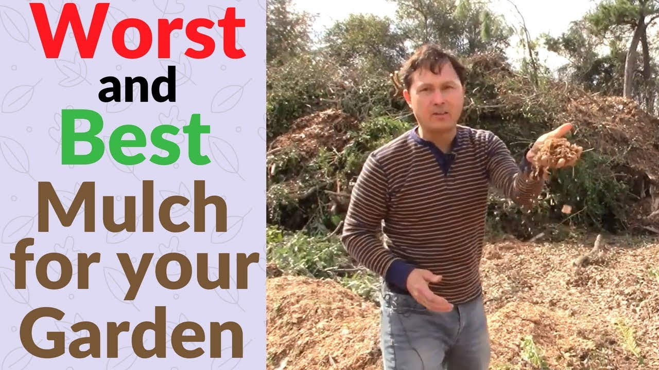 Worst And Best Wood Chip Mulch For Your Vegetable Garden Youtube