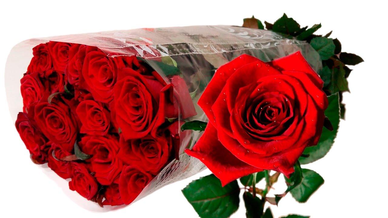 Саженцы роз в питомнике в городе пушкин, санкт-петербурге. Купить недорого здоровые саженцы кустовой розы, плетистой розы и почвопокровной.