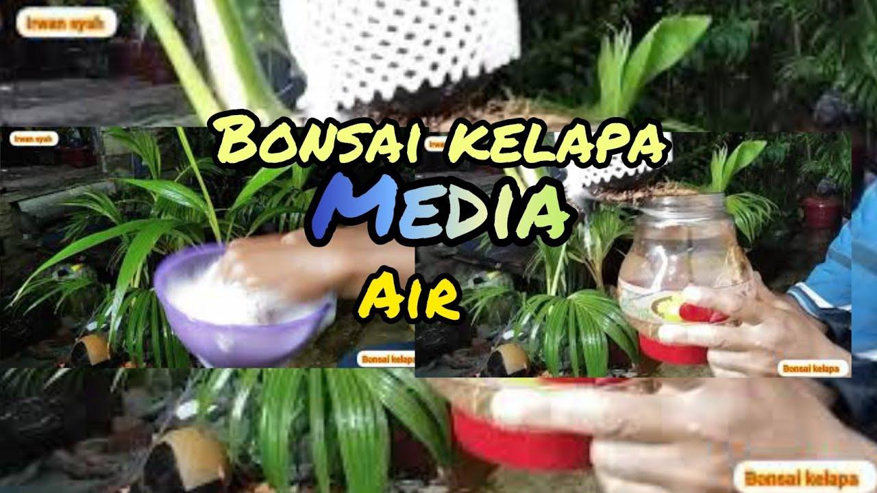 Bonsai Gantung Media Air By Hai Hai