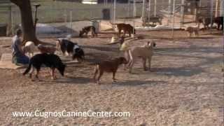 Yard Stabilization - Dog Behavior - Cugno's Canine Center