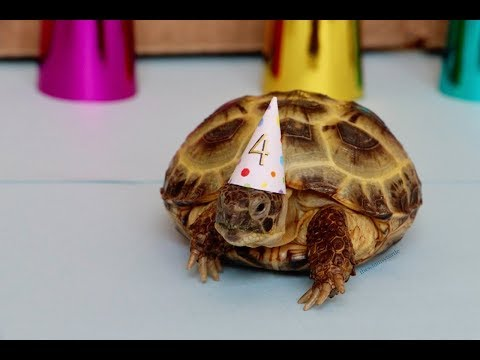 How to Throw A Rainbow Birthday Party for A Tiny Tortoise