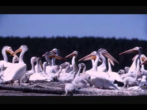 Screensavers - Aquarium, Nature, Wildlife Free Downloads