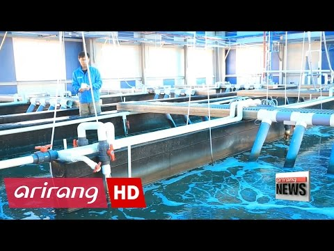 Korea invests in aquaculture in anticipation of growing seafood demand