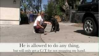 No Mugging: Clicker Dog Training - Shapefest 2012