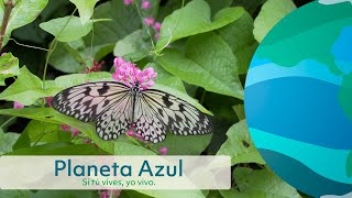 Flores y Mariposas • Flowers and Butterflies