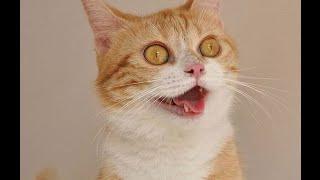 Забавные кошки! Смешное Видео с Кошками 2015! №6
