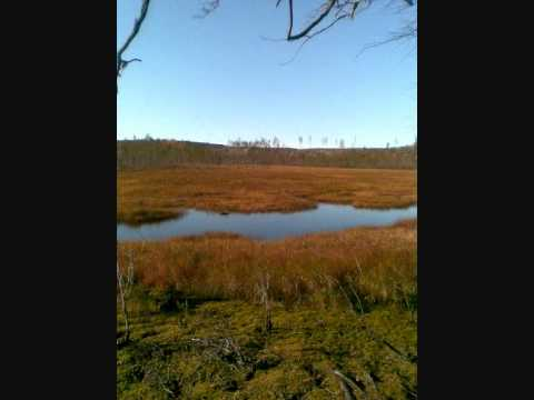 Swedish Nature Song-Ce