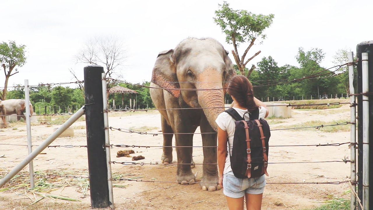 Verwonderlijk Reisebericht • 1 Tag mit Elefanten in Thailand • ohne Tierquälerei YS-79