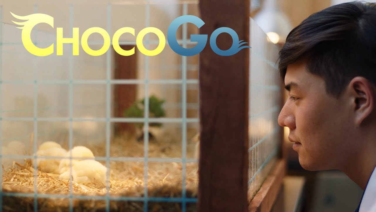 Introducing ChocoGo by FINAL FANTASY XIV | Final Fantasy | Know Your